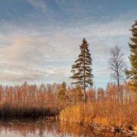 Даниковское озеро.Вечерний час :: Валерий Талашов