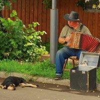 Гармонист :: Валерий Толмачев