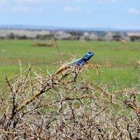 Танзания. :: Елена Савчук