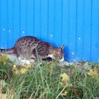 Охота за другим котом :: Andrew