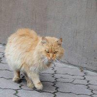 Суровый кот :: юлия.. Таксебефотограф))