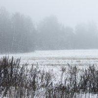 Туман. :: Яков Реймер