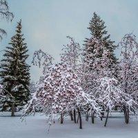 Первый снег :: Nn semonov_nn