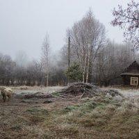 Ноябрьские заморозки :: Людмила Комарова