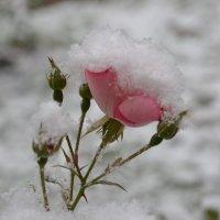 Первый снег в октябре :: Александр Филатов