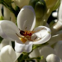 Цветок сирени с паучком :: Асылбек Айманов