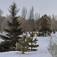 Зимние зарисовки 5 :: Алексей Масалов