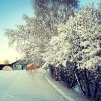 Морозный декабрьский денёк :: Николай Туркин