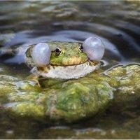 Принц-лягушка :: Виктория Иванова