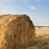Уборка урожая :: Dmitriy Stoyanov