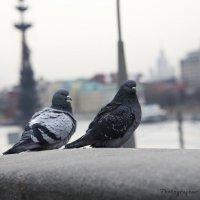 Голубки на Крымском мосту :: Виктор М