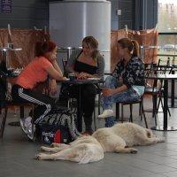 Три дивицы  у окна ....... и две собаки - итоги выставки :: Ольга ОК Попова