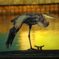 heron :: svabboy photo
