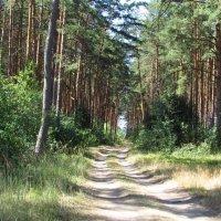 Лесная дорожка... :: Дмитрий