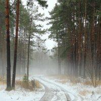 Март удивил туманами декабрь... :: Лесо-Вед (Баранов)