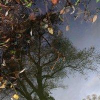 Осень  в  реалии  и в  отражении...... :: Валерия  Полещикова
