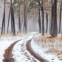 Напросился март к морозам в гости...в декабре!.. :: Лесо-Вед (Баранов)
