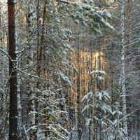 Зимняя сказка 3 :: Николай Варламов