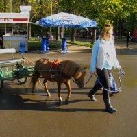 А можно и на пони. :: Александр Атаулин