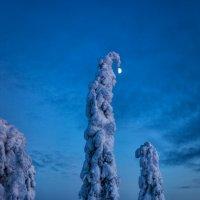 Луна на елке :: Александр Чазов