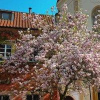 Тюльпановое дерево :: Елена Доброумова