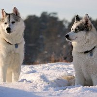 Игры на снегу :: И.В.К. ))
