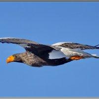 Птичка :: Валерий Антонов