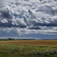 Спелое поле :: Виктор Четошников
