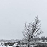 Зимние зарисовки 7 :: Алексей Масалов