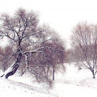 """""""Белым сном деpевья спят,  но им, как нам, цветные снятся сны.."""" :: Инна Малявина"""