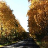 Осенний пейзаж  с  дорогой.... :: Валерия  Полещикова
