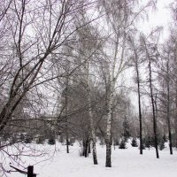 Зима в Сибири :: раиса Орловская