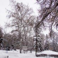 Зима -это чудо природы :: раиса Орловская