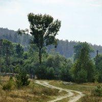 Дорога к лесу :: Юрий Мельник