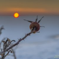 Все живое тянется к Солнцу :: Valeriy Piterskiy