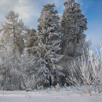 Морозный день :: vladimir Bormotov