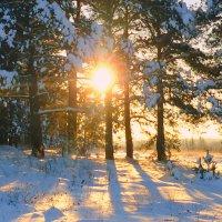 Солнечный снег.Зимний рассвет. :: Павлова Татьяна Павлова