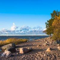 На берегу залива :: Виталий