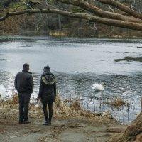Весна! Молодые у пруда, другая пара крутится у своего гнезда... :: Юрий Поляков