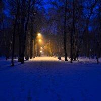 В зимнем парке. :: cfysx