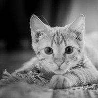 Мой котик ) :: ольга каверзникова