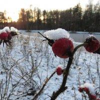 Замерзающие :: Вера Щукина