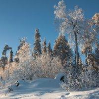 Сверкающие на солнце :: vladimir Bormotov