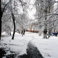 Дорожка :: Виктор Сергеевич Конышев