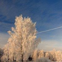 Когда зима была настоящей :: Николай Белавин