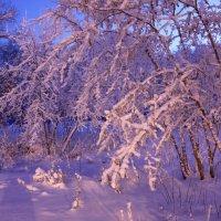 Свет утренних фонарей :: Мария Кухта