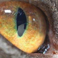 Eye :: Алексей Петров