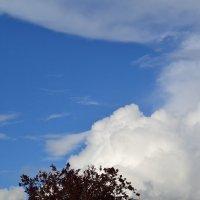 Облака. :: zoja