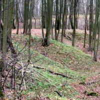 Лесной овраг. :: Борис Митрохин