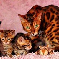 Маленький леопард! :: Яна